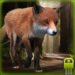Download Clever Fox Simulator  MOD APK Unlimited Money