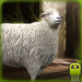 Download Full Cute Sheep Simulator 1.0 APK MOD Unlimited Cash