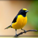 Download Full species of birds chirping  MOD APK Unlimited Cash
