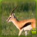 Download Full Cute Gazelle Simulator  MOD APK Full Unlimited