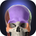Download Anatomyka – 3D Human Anatomy Atlas 1.8.0 APK Full