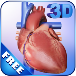 Download My Heart Anatomy 1.4 MOD APK Full
