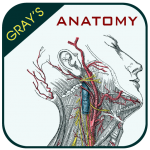 Get Gray's Anatomy – Anatomy Atlas 2020 4.3 MOD APK Unlimited